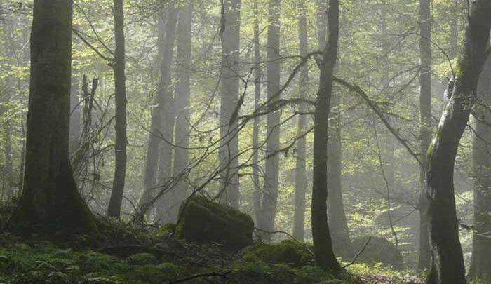 از ثبت جهانی جنگل های ارسباران چه خبر؟