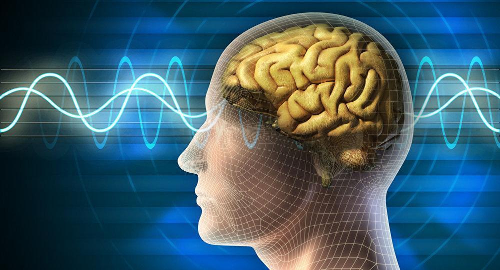 بهترین مواد غذایی برای عملکرد بهتر مغز